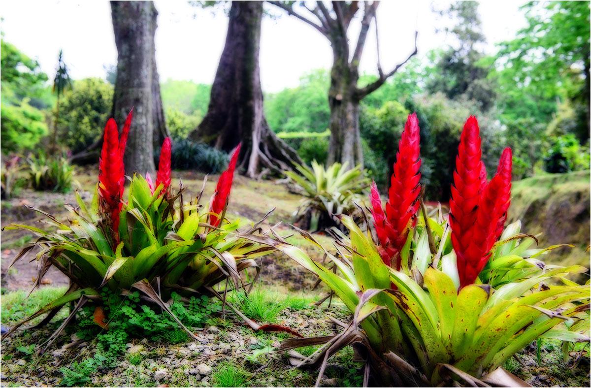 Terra Nostra Gardens, Furnas, Sao Miguel (Azoren, mei2014)