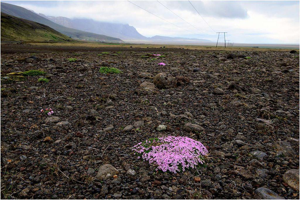 Omgeving Kirkjubæjarklaustur (IJsland mei 2016)
