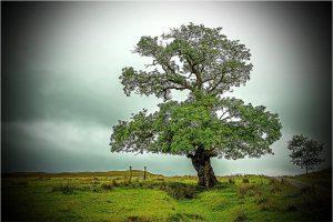 Inversanda (Schotland, sep.2013)