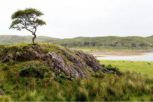 Kilmalieu, Loch Linnhe (Schotland, sep.2013)