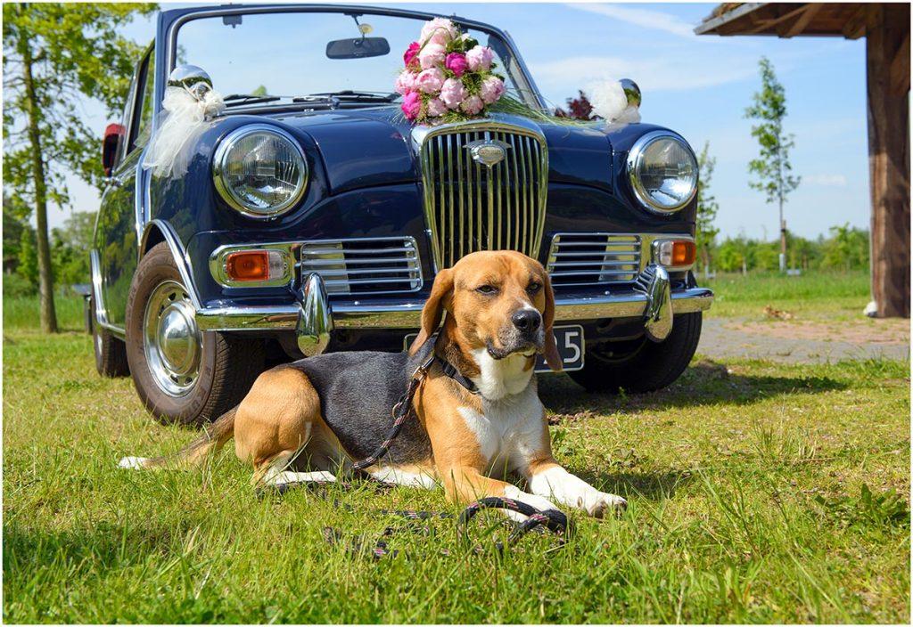 Bennie (uit bruidsreportage, mei 2013)