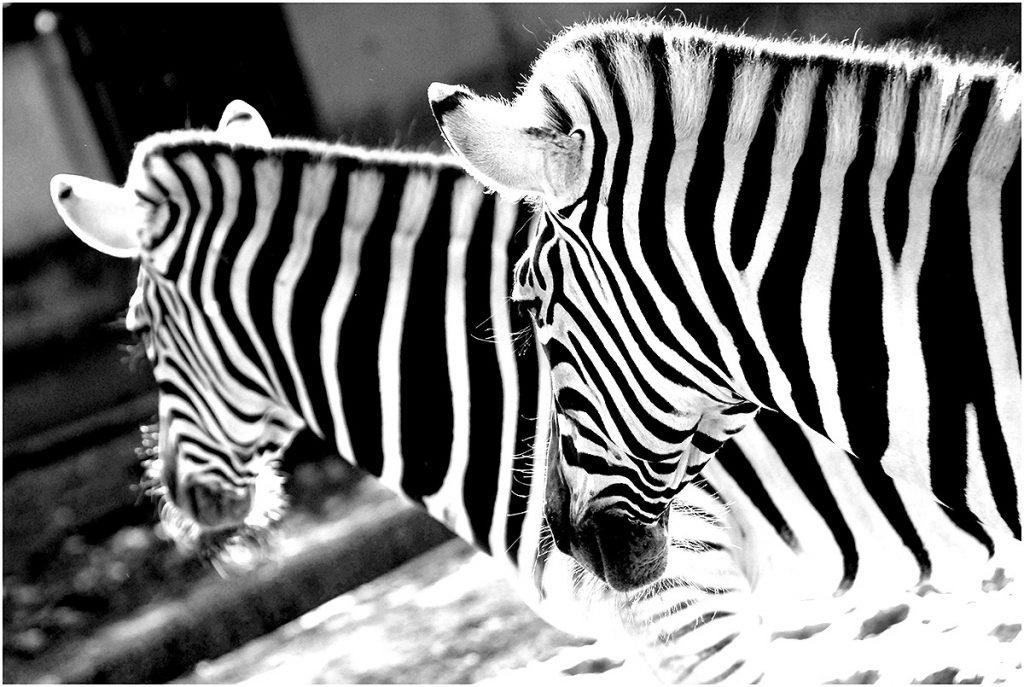 Zoo Duisburg (sept. 2008)