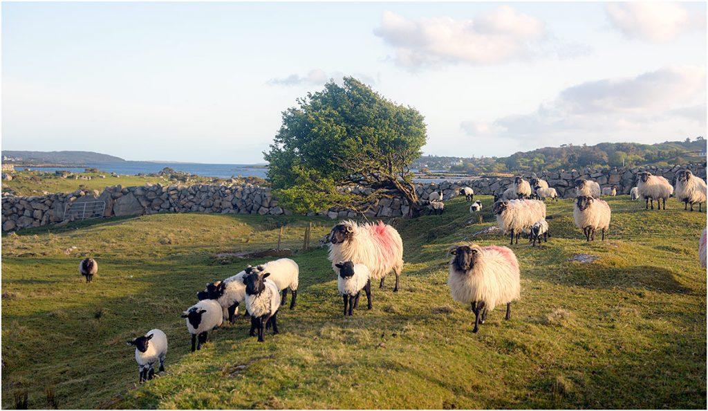 Roundstone, Connemara, County Galway