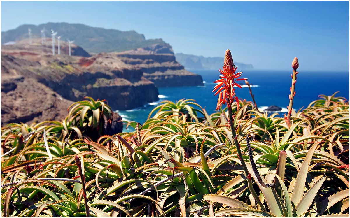 Ponta do Rosto, Madeira (sept. 2011)