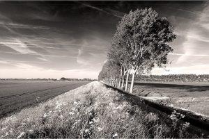 Zeeuws Vlaanderen, omgeving Sluis [ZL9_0197ZW]