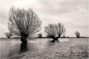 Bronkhorst, hoog water in de uiterwaarden van de IJssel (27-2-2020) Nikon D750; ISO100; 1/100sec.; f/8; 31mm. [FB0_0369ZW]
