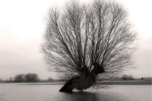 Bronkhorst, hoog water in de uiterwaarden van de IJssel (27-2-2020) Nikon D750; ISO100; 1/80sec.; f/8; 35mm. [FB0_0374ZW]