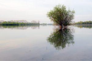 Azewijnse Broek bij Gendringen (16-4-2020) Nikon D750; ISO100; 1/10sec.; f/11; 35mm. [AP0_0598]