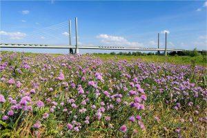 Rheinbrücke, aan de Rijn bij Rees (D) (27-5-2020) Nikon D750, ISO100; 1/80sec.; f/16; 27mm. [ME0_0984]