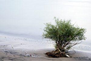 Ooij, Waalstrandje in de Ooijpolder (12-9-2020) Nikon D750; ISO-100; 16sec; f/11; 135mm [090_0404]