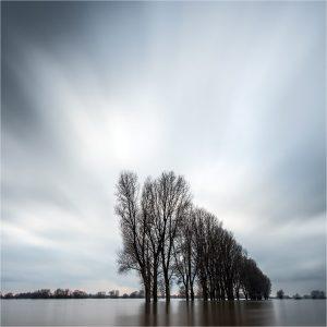 """""""Rhein-Hochwasser [650]"""".  Rijnuiterwaarden Rees (D)"""