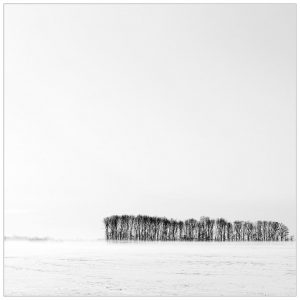 """""""Minimalistisch bosje"""" in de sneeuw, Netterden"""