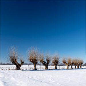 Wilgen in de winter, Ongerstraat Azewijn