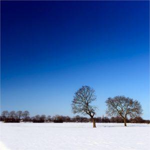 """""""Dancing Trees"""". Winter, tussen Megchelen en Gendringen"""