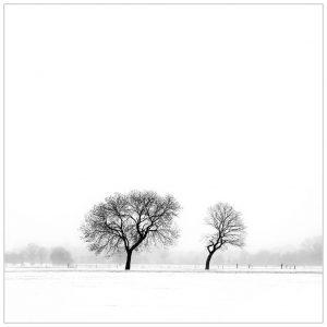 """""""Dancing Trees"""". Winter, tussen Gendringen en Megchelen"""