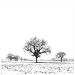 """""""Eikelenbomen"""".  Eikelenboomseweg te Gendringen"""