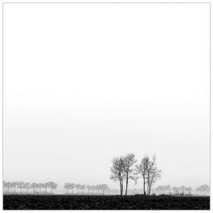 """""""In the line of trees"""" aan de Broekweg bij Azewijn"""