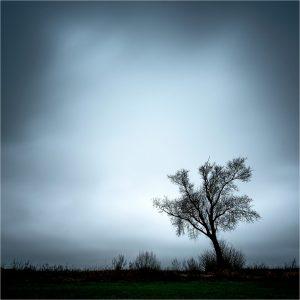 """""""Ghost Tree"""" in de uiterwaard bij Emmerich am Rhein (D)"""