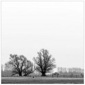 """""""Bomenvormen"""" aan de Grietherorter Altrhein bij Dornick (D)"""