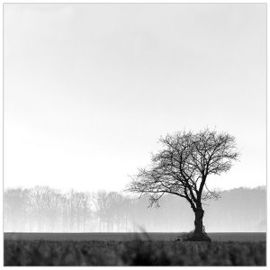 """""""Alone in the field"""", Winterswijk-Kotten"""