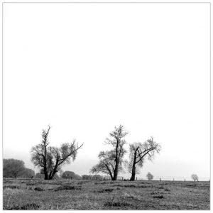 """""""Vreemd gevormd trio"""", Naturschutzgebiet Grietherorter Altrhein"""