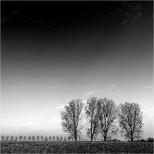 """""""Bomenrijen"""" in de IJsseluiterwaarden bij Bronkhorst"""