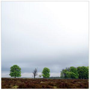 """Fris bladgroen"", Nat. Park de Hoge Veluwe (17-5-2021) [105_3006]"