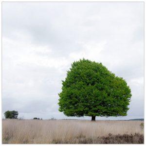 """""""Fris bladgroen II"""" Nat. Park de Hoge Veluwe (17-5-2021) [105_3124]"""