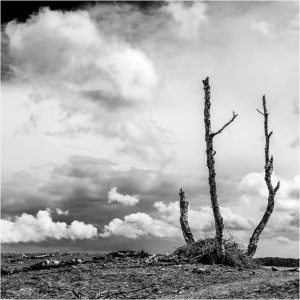 """Dood hout"" Nat. Park de Hoge Veluwe (17-5-2021) [105_3168ZW]"