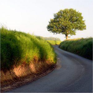 Holleweg op de heuvels bij Sonsbeck (D) (30-5-2021) [105_3479]